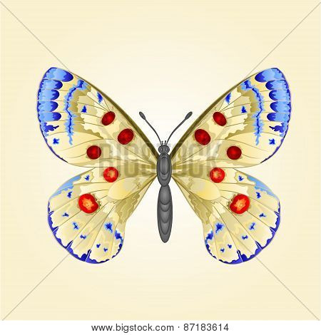Butterfly Parnassius  Vector