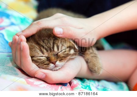 Sleeping Kitten In A Female Hands