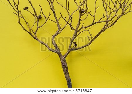 Tree On Yellow Background