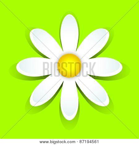 3D-daisy On Green