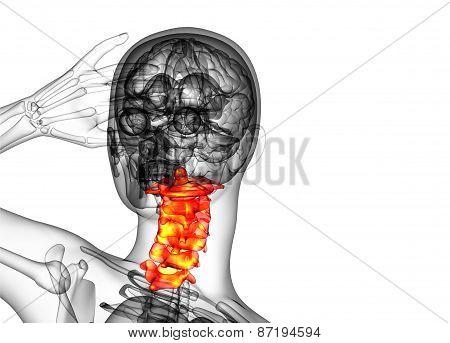 3D Render Medical Illustration Of The Cervical Spine