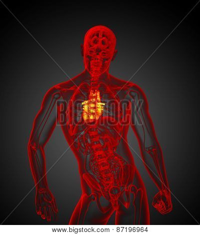 3D Render Medical Illustration Of The Human Heart
