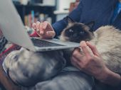 picture of lap  - A young woman is using her laptop at home with a cat sitting on her lap - JPG