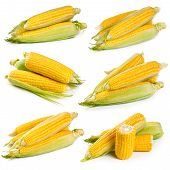 pic of corn  - Set of fresh sweet corn isolated on white background - JPG