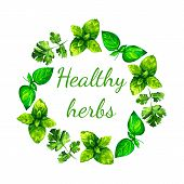 image of oregano  - Realistic watercolor illustration herbs wreath. Basil. Parsley. 