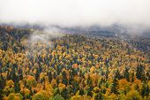 picture of foliage  - Scenicl autumn landscape with trees leaves lush foliage and fog - JPG