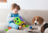 image of petting  - Baby boy playing with toys next to his beagle pet dog - JPG