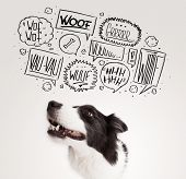 picture of white bark  - Cute black and white border collie with barking speech bubbles above her head - JPG
