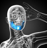 picture of jaw-bone  - 3D medical illustration of the jaw bone  - JPG
