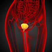 pic of bladder  - 3d render medical illustration of the bladder  - JPG