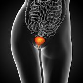 picture of bladder  - 3d render medical illustration of the bladder  - JPG