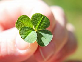 stock photo of four  -  a hand holding a four leaf clover  - JPG