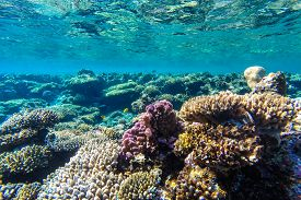 stock photo of aquatic animals  - red sea coral reef with hard corals fishes and sunny sky shining through clean water  - JPG