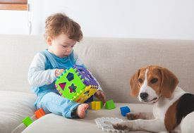 pic of toy dog  - Baby boy playing with toys next to his beagle pet dog - JPG