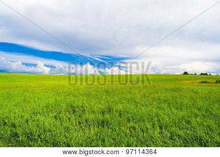 Green Plain Vibrant Nature