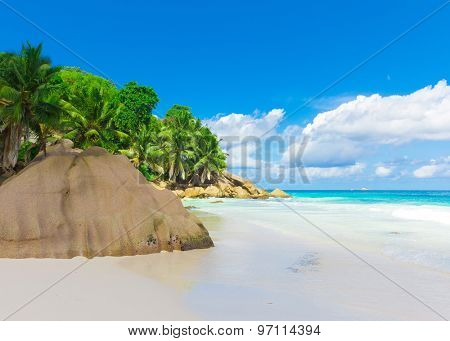 Tranquility Jungle Shore