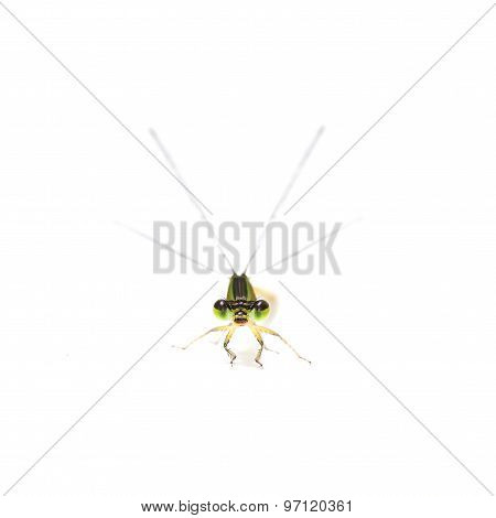 Dragonfly Frontview Isolate On White Background