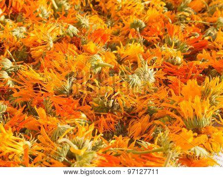 drying marigold calendula officinalis
