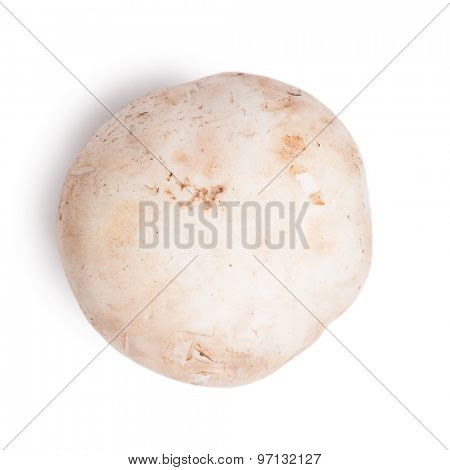 Fresh champignon mushroom isolated on white background