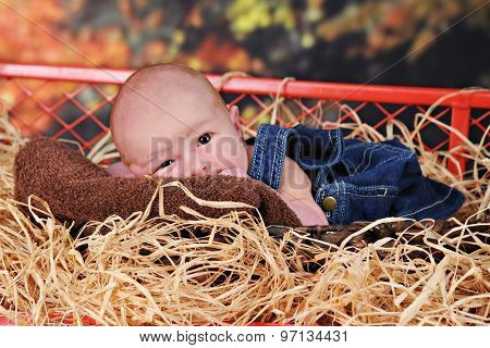 An adorable newborn boy wearing blue overalls in a hay-filled work wagon against colorful fall foliage.