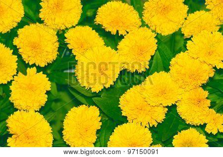 The Beautiful Yellow Flowers