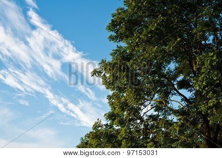 Deciduous Trees And Blue Sky Whith Clouds
