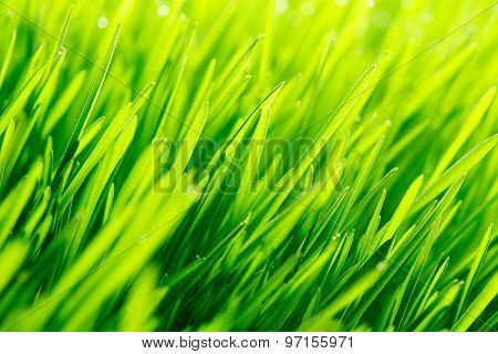 Beautiful natural background with fresh spring grass