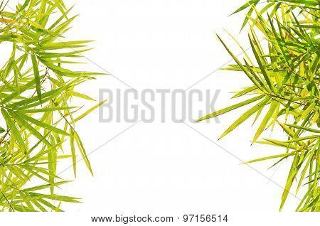 Green Bamboo Leaf Background Border