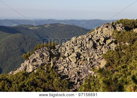 Rocky Mountain Hill And Pine Tree Branches