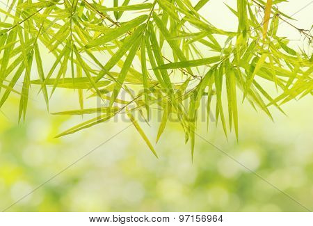 Green Bamboo Leaf Background