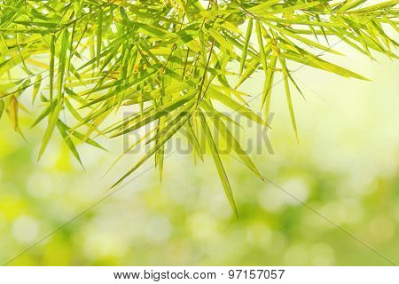 Natural Green Bamboo Leaf On Blur Background Of  Forest