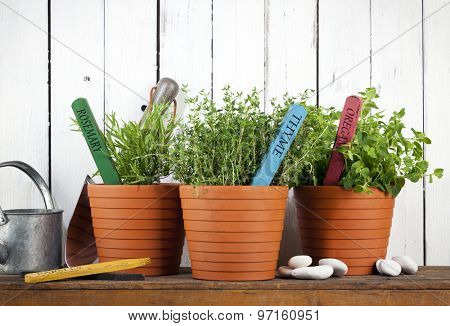 rosemary, thyme and oregano in pots with flower tags on shelf