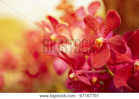 Beautiful Purple orchid flower tree with sunset tone.