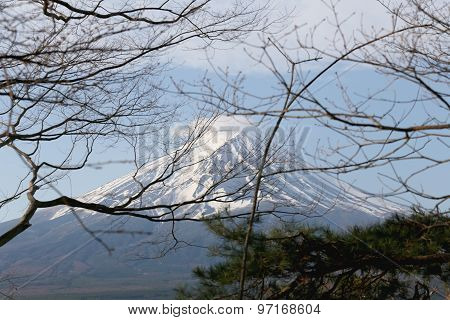 Branch Of Tree And View Of Mount Fuji.