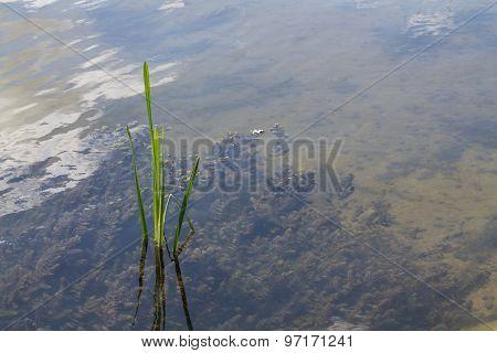 River algae.