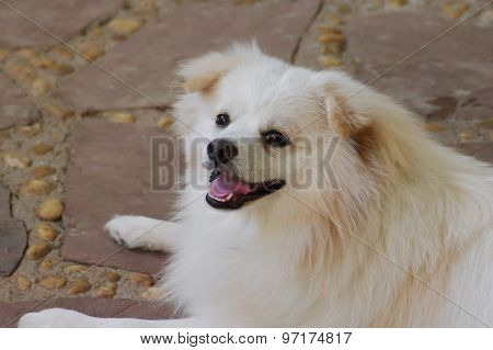 White Dog Smile.