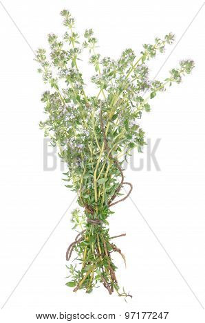 Twigs of herb thyme