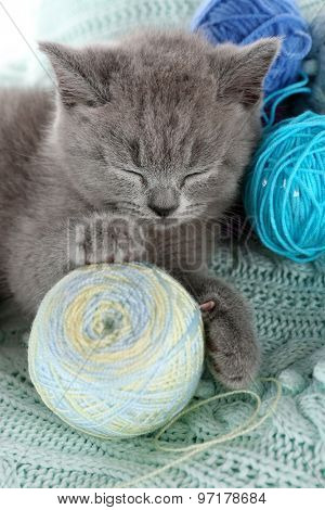 Cute gray kitten with skeins of thread on warm plaid, closeup