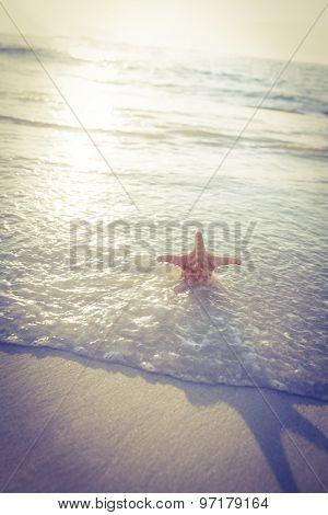 Starfish on the sand on beautiful see