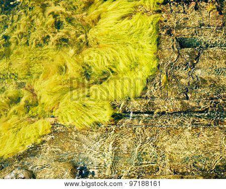 Live Algae, Waves And Rocks