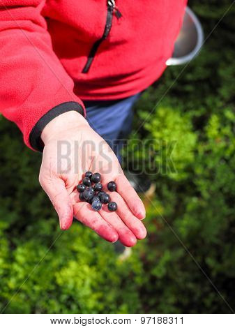 Blueberries On Hand