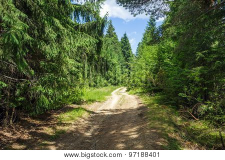 Country Road Through Pine Forest