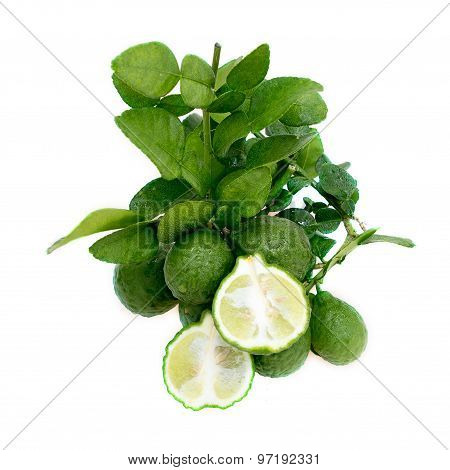Kaffir limes with green leaves on white