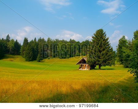 Wooden hut and tree in the middle of meadow