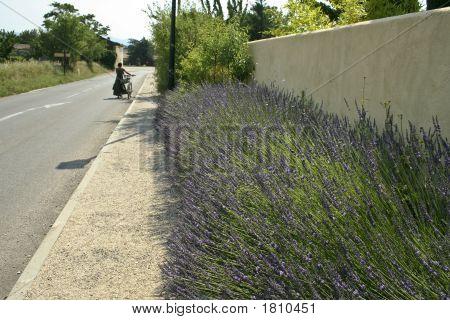 Lourmarin Bicycle