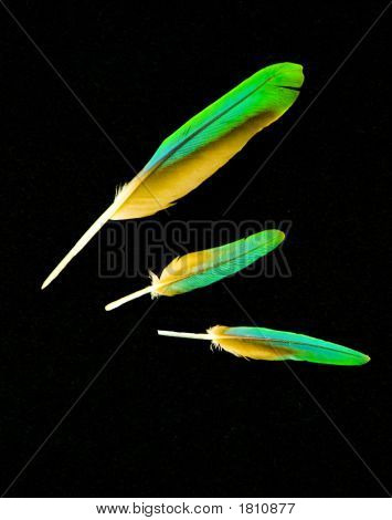 Three Parrot Feathers