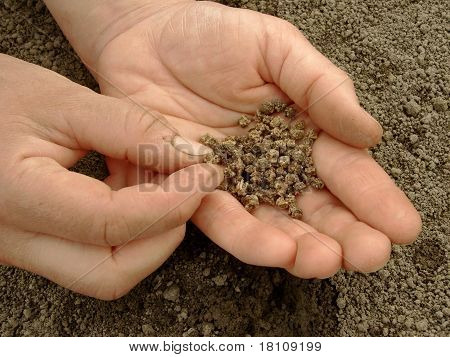 Hand With Beetroot Seeds