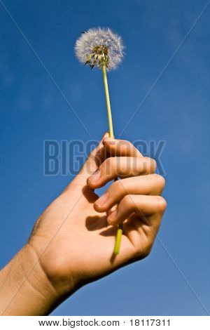 Dandelion In Woman's Hand Against Blue Sky
