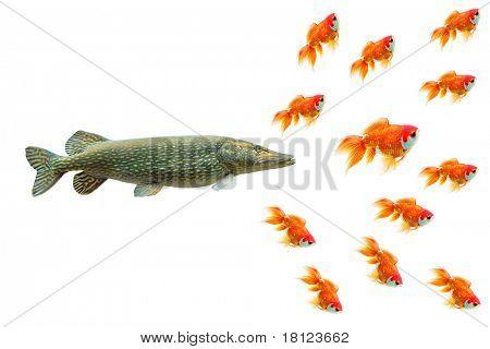 Pike e peixinho. Imagem conceitual. Metáfora do negócio.