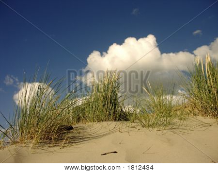 Grass And Clouds